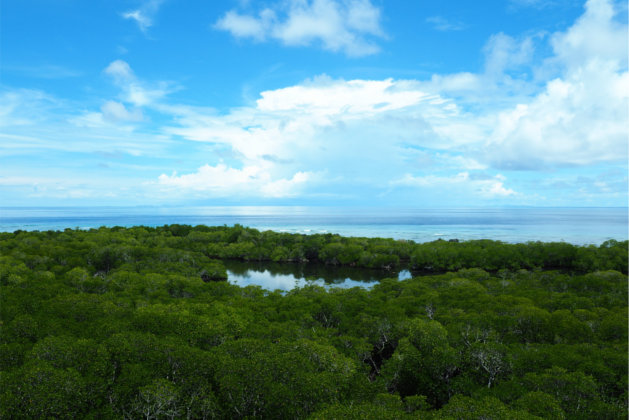 lagoon and reef view from lighthouse on Apo Island / Apo Reef